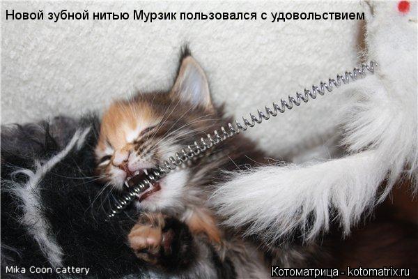 Котоматрица: Новой зубной нитью Мурзик пользовался с удовольствием
