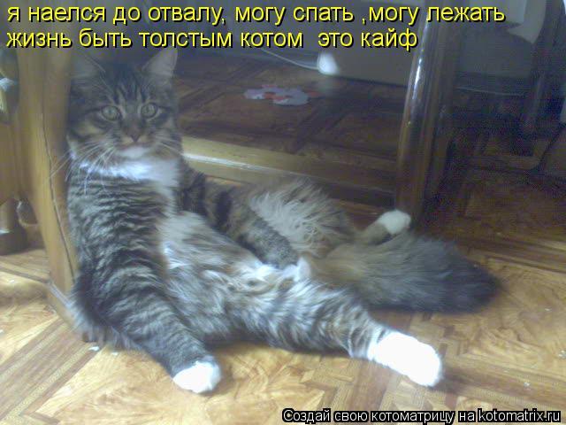 Котоматрица: я наелся до отвалу, могу спать ,могу лежать жизнь быть толстым котом  это кайф