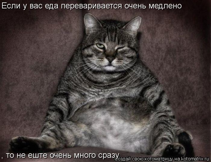 Котоматрица: Если у вас еда переваривается очень медлено    , то не еште очень много сразу