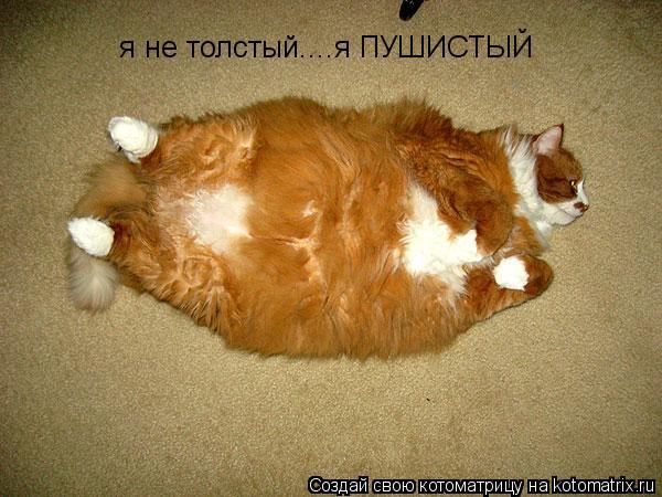 Котоматрица: я не толстый....я ПУШИСТЫЙ