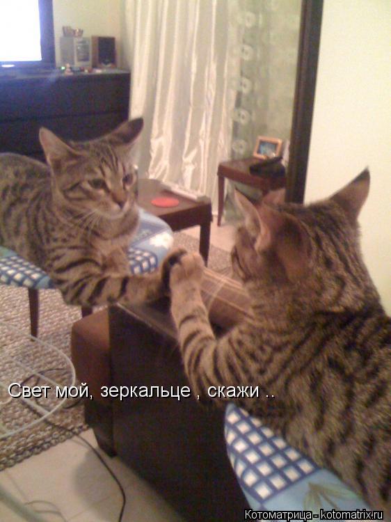 Котоматрица: Свет мой, зеркальце , скажи ..