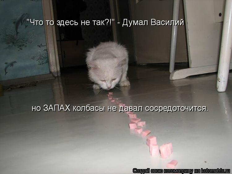 """Котоматрица: """"Что то здесь не так?!"""" - Думал Василий но ЗАПАХ колбасы не давал сосредоточится."""