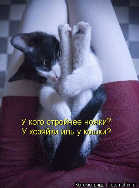 Котоматрица: У кого стройнее ножки У хозяйки иль у кошки? ?