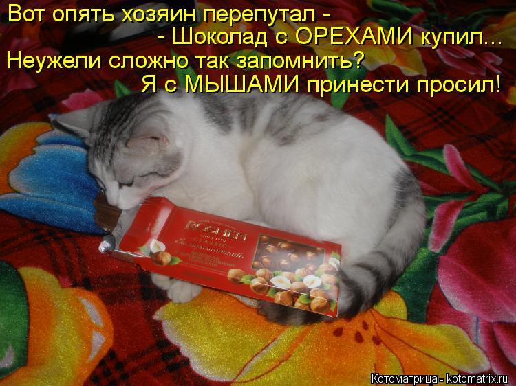 Котоматрица: Вот опять хозяин перепутал - - Шоколад с ОРЕХАМИ купил... Неужели сложно так запомнить? Я с МЫШАМИ принести просил!