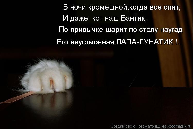 Котоматрица: В ночи кромешной,когда все спят, И даже  кот наш Бантик, По привычке шарит по столу наугад Его неугомонная ЛАПА-ЛУНАТИК !..
