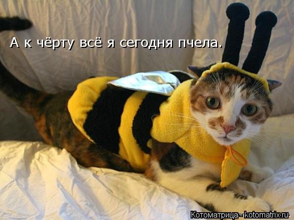 Котоматрица: А к чёрту всё я сегодня пчела. А к чёрту всё я сегодня пчела.