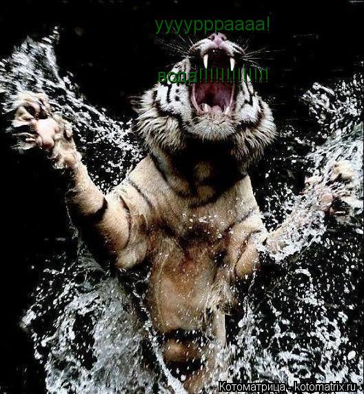 Котоматрица: ууууррраааа! вода!!!!!!!!!!!!!