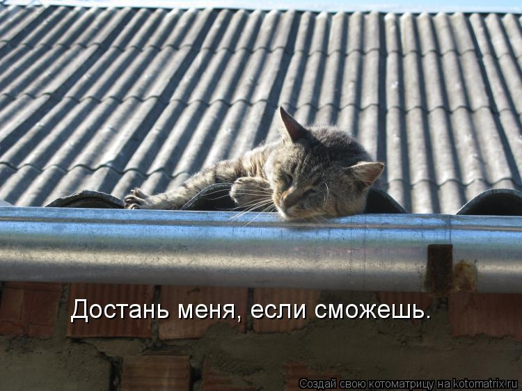 Котоматрица: Достань меня, если сможешь.