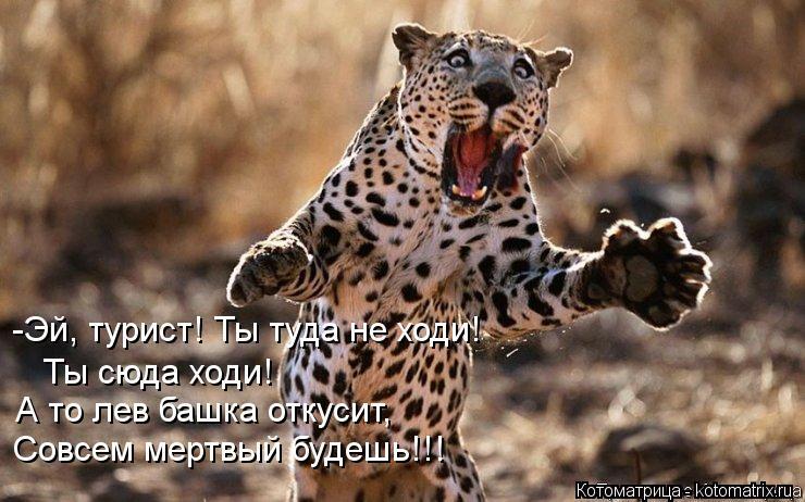 Котоматрица: -Эй, турист! Ты туда не ходи! Ты сюда ходи! А то лев башка откусит, Совсем мертвый будешь!!!