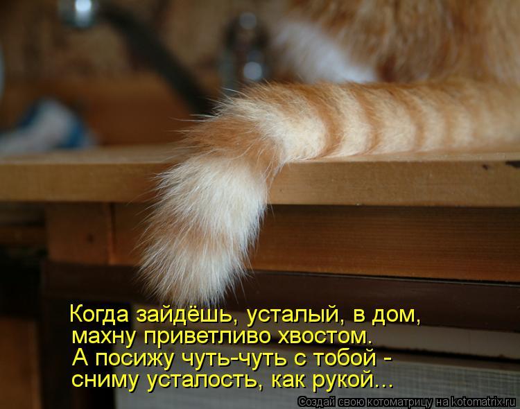 Котоматрица: Когда зайдёшь, усталый, в дом, махну приветливо хвостом. А посижу чуть-чуть с тобой -  сниму усталость, как рукой...