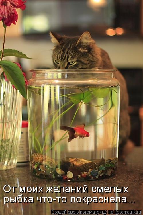 Котоматрица: От моих желаний смелых рыбка что-то покраснела...