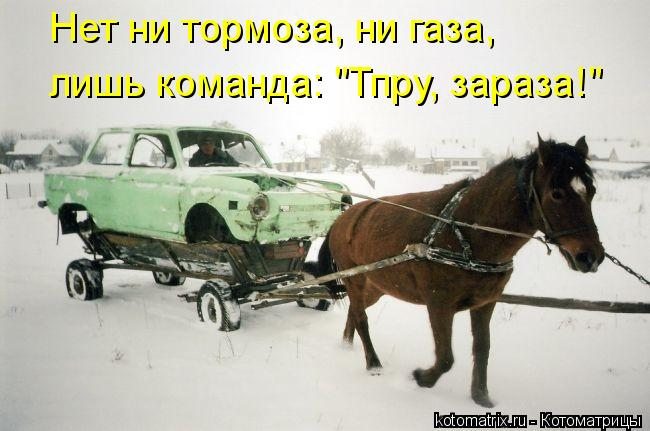 "Котоматрица: Нет ни тормоза, ни газа, лишь команда: ""Тпру, зараза!"""