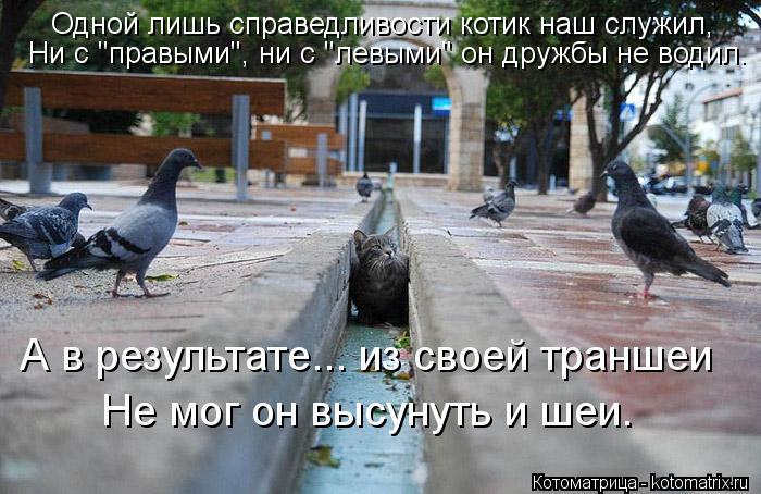 """Котоматрица: Одной лишь справедливости котик наш служил, Ни с """"правыми"""", ни с """"левыми"""" он дружбы не водил. А в результате... из своей траншеи Не мог он высуну"""