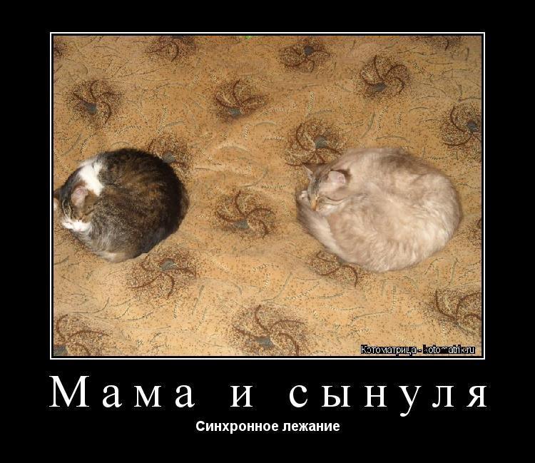 Котоматрица: Мама и сынуля Синхронное лежание