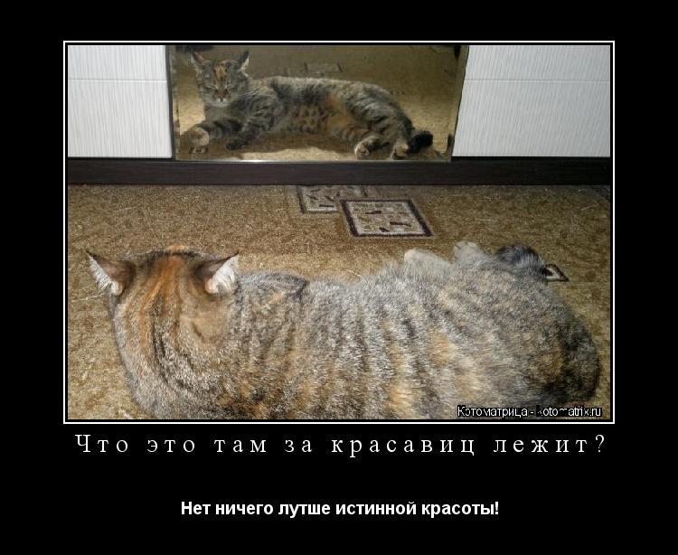 Котоматрица: Что это там за красавиц лежит? Нет ничего лутше истинной красоты!