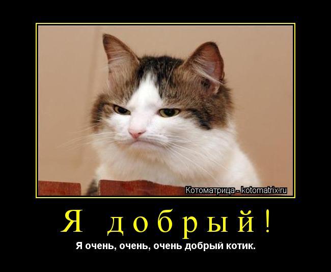 Котоматрица: Я добрый! Я очень, очень, очень добрый котик.