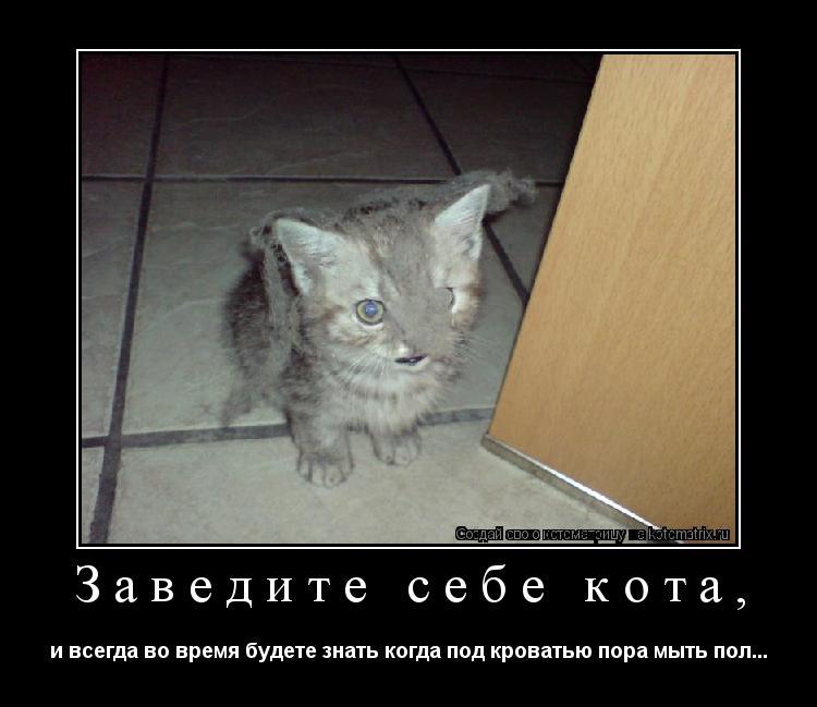 Котоматрица: Заведите себе кота, и всегда во время будете знать когда под кроватью пора мыть пол...