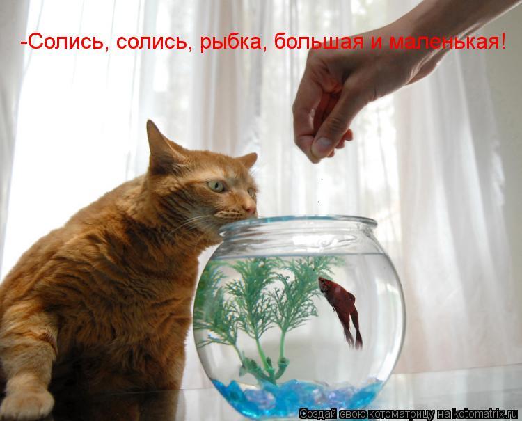Котоматрица: -Солись, солись, рыбка, большая и маленькая!