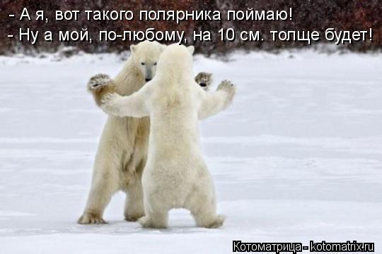 Котоматрица: - А я, вот такого полярника поймаю! - Ну а мой, по-любому, на 10 см. толще будет!