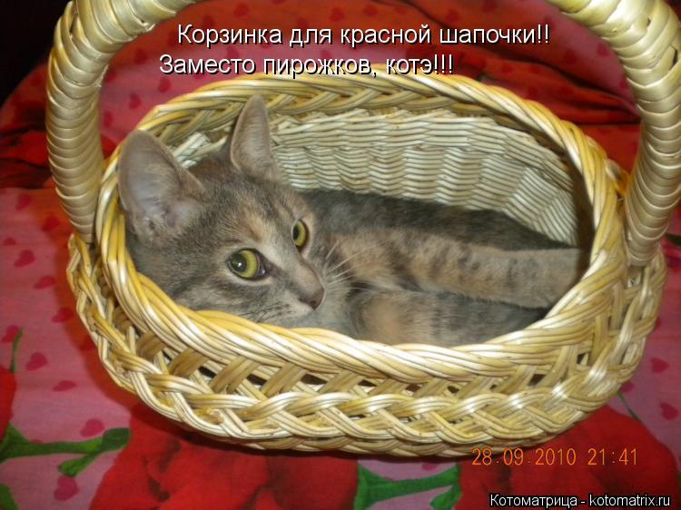 Котоматрица: Корзинка для красной шапочки!! Заместо пирожков, котэ!!!