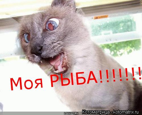 Котоматрица: Моя РЫБА!!!!!!!!!!!!!!!!!!!!!