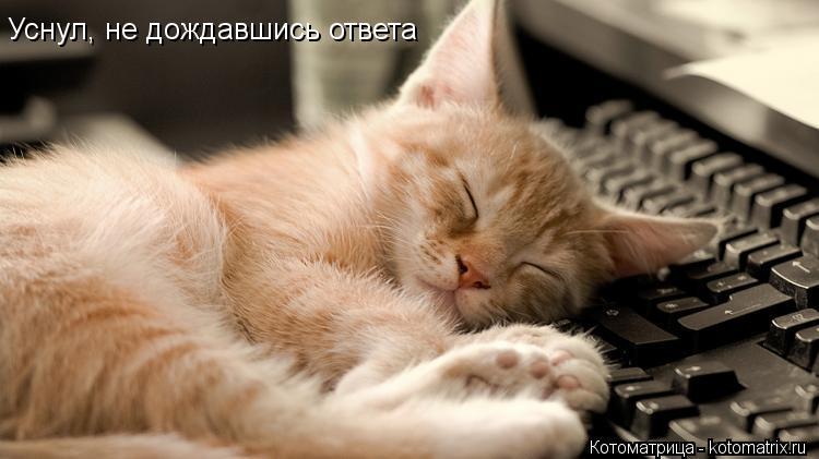 Котоматрица: Уснул, не дождавшись ответа