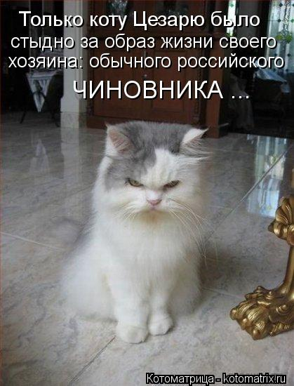 Котоматрица: Только коту Цезарю было стыдно за образ жизни своего хозяина: обычного российского ЧИНОВНИКА ...