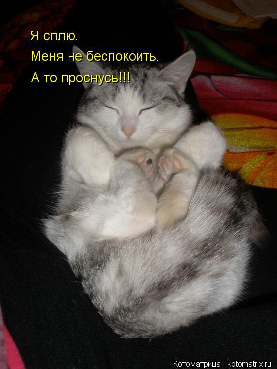 Котоматрица: Я сплю. Меня не беспокоить. А то проснусь!!!