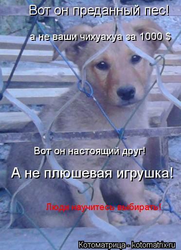 Котоматрица: Вот он преданный пес! а не ваши чихуахуа за 1000 $ Вот он настоящий друг! А не плюшевая игрушка! Люди научитесь выбирать!