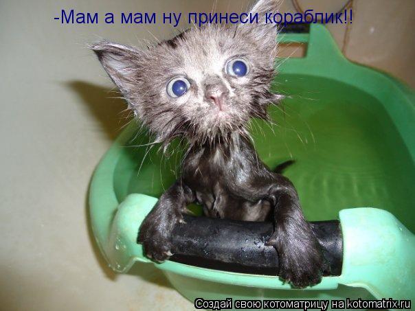 Котоматрица: -Мам а мам ну принеси кораблик!!