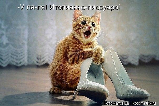 Котоматрица: -У ля-ля! Итолианно-писсуаро!