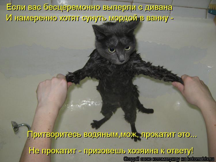 Котоматрица: Если вас бесцеремонно выперли с дивана И намеренно хотят сунуть мордой в ванну - Не прокатит - призовешь хозяина к ответу! Притворитесь водя