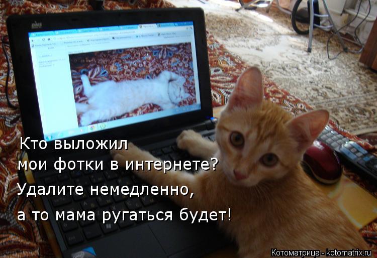 Котоматрица: Кто выложил мои фотки в интернете? Удалите немедленно, а то мама ругаться будет!