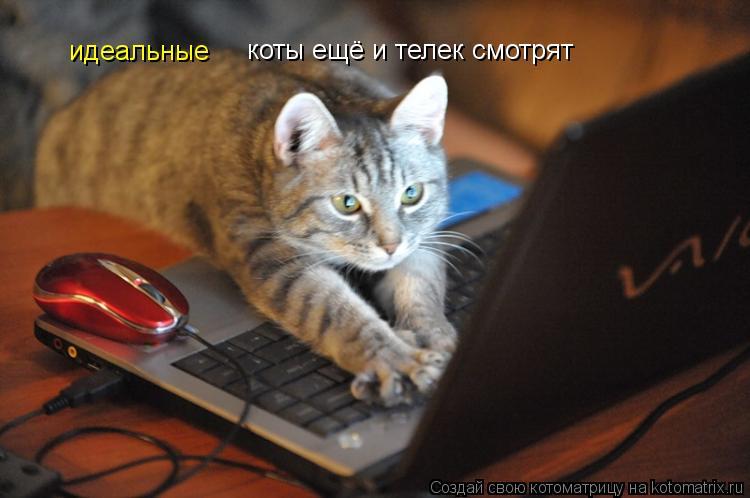 Котоматрица: идеальные коты ещё и телек смотрят