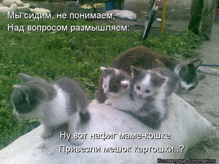 Котоматрица: Мы сидим, не понимаем, Над вопросом размышляем: Ну вот нафиг маме-кошке Привезли мешок картошки..?