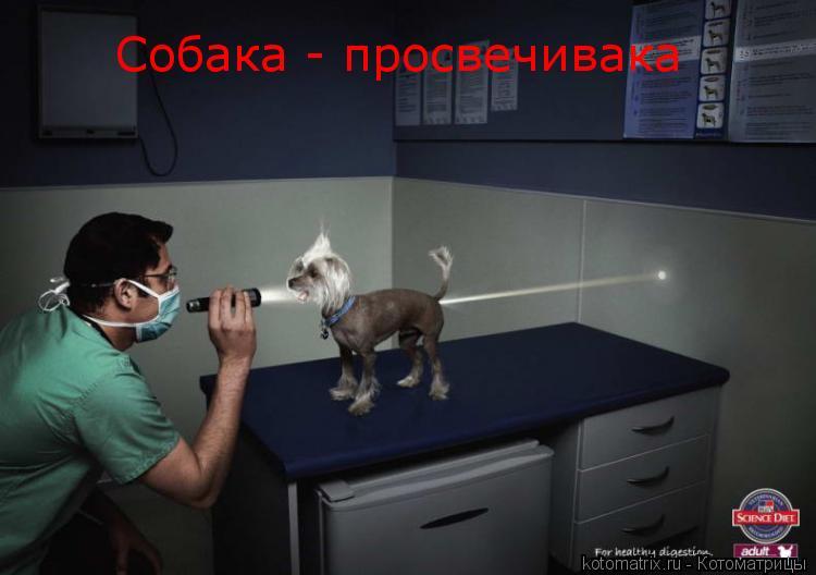 Котоматрица: Собака - просвечивака