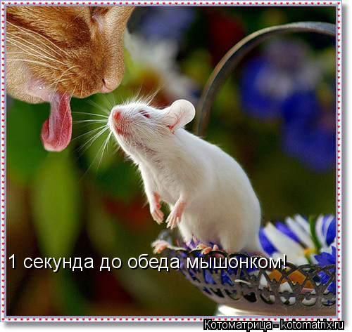 Котоматрица: 1 секунда до обеда мышонком!