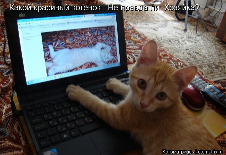 Котоматрица: - Какой красивый котёнок...Не правда ли, Хозяйка?