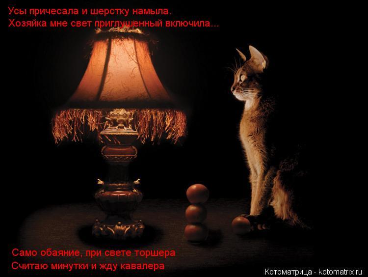 Котоматрица: Усы причесала и шерстку намыла. Хозяйка мне свет приглушенный включила... Само обаяние, при свете торшера Считаю минутки и жду кавалера