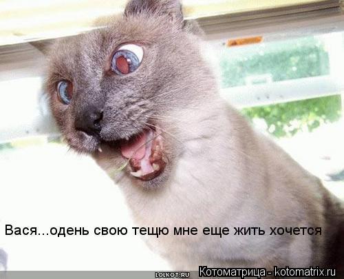 Котоматрица: Вася...одень свою тещю мне еще жить хочется