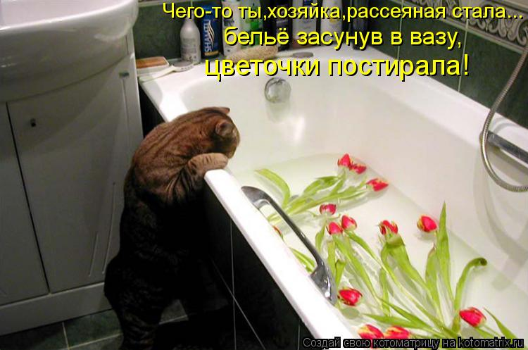 Котоматрица: Чего-то ты,хозяйка,рассеяная стала... бельё засунув в вазу, цветочки постирала!