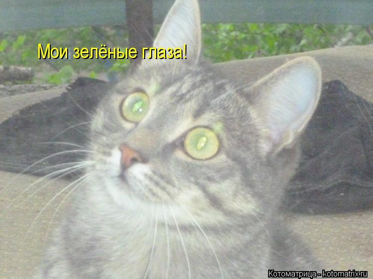 Котоматрица: Мои зелёные глаза!