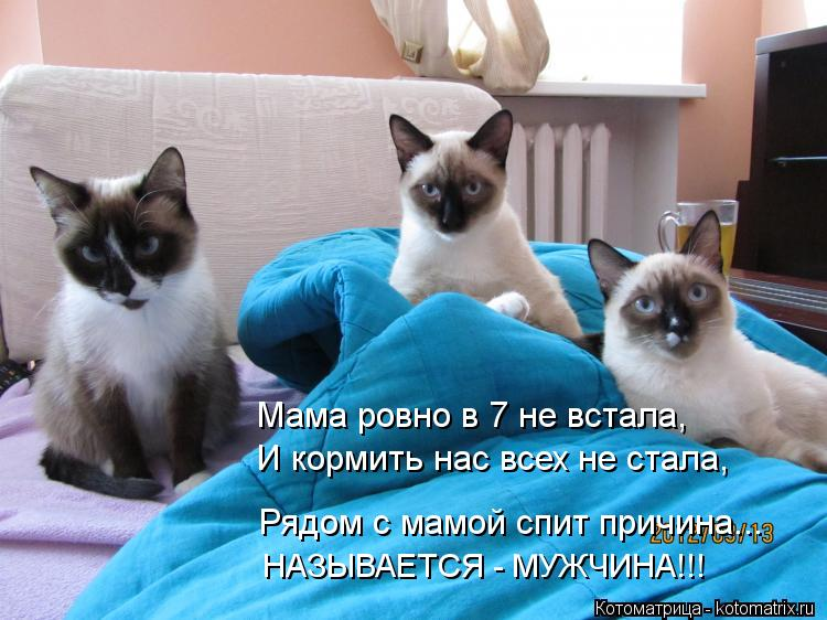 Котоматрица: Мама ровно в 7 не встала, И кормить нас всех не стала, НАЗЫВАЕТСЯ - МУЖЧИНА!!! Рядом с мамой спит причина...