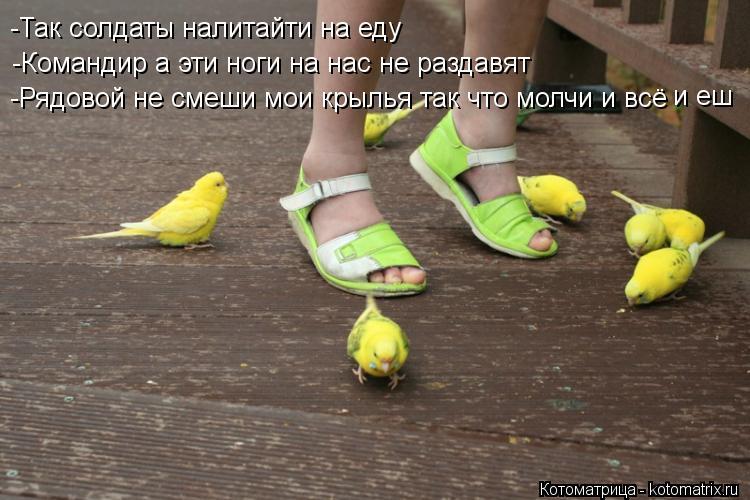 Котоматрица: -Так солдаты налитайти на еду -Командир а эти ноги на нас не раздавят -Рядовой не смеши мои крылья так что молчи и всё и еш