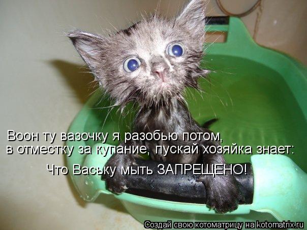 Котоматрица: Воон ту вазочку я разобью потом , в отместку за купание, пускай хозяйка знает: Что Ваську мыть ЗАПРЕЩЕНО!