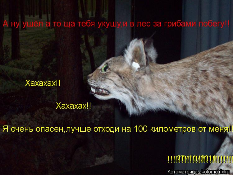 Котоматрица: А ну ушёл а то ща тебя укушу,и в лес за грибами побегу!! Я очень опасен,лучше отходи на 100 километров от меня!! Хахахах!! Хахахах!! !!!!!!!!!!!!!!!!!!!!!!!!