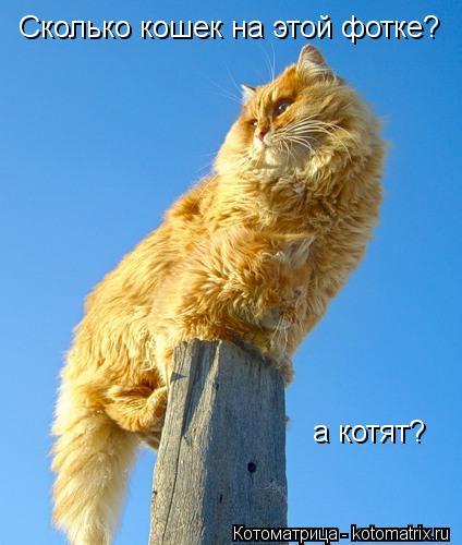 Котоматрица: Сколько кошек на этой фотке? а котят?