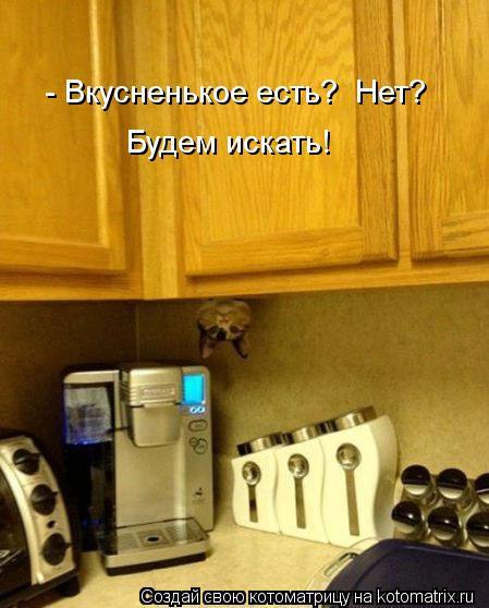 Котоматрица: - Вкусненькое есть?  Нет? Будем искать!