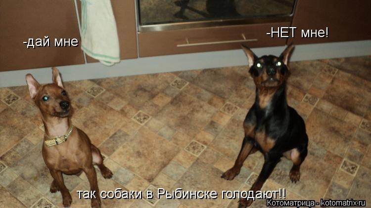 Котоматрица: -дай мне  -НЕТ мне! так собаки в Рыбинске голодают!!