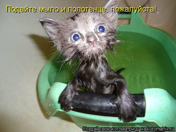 Котоматрица: Я больше НЕ БУДУ спать  не твоей подушке, хозяин!!! Подайте мыло и полотенце, пожалуйста!